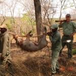 Nguvu Safaris Hunts 1 (37)